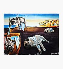 Persistence of Pugs Photographic Print