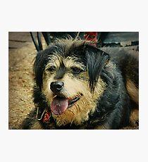 """Goodess"" the Shaggy Dog Photographic Print"