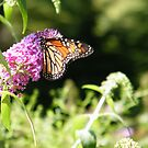 Butterfly and Flowers, Queens Zoo, Flushing Meadow Park, Queens, New York   by lenspiro