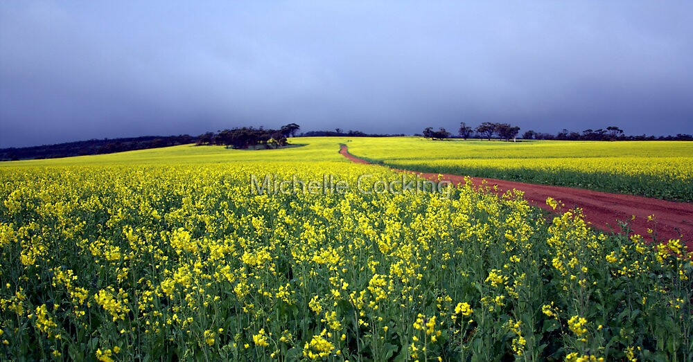 Owen's Canola by Michelle Cocking