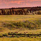 Where the Buffalo Roam by Dale Lockwood