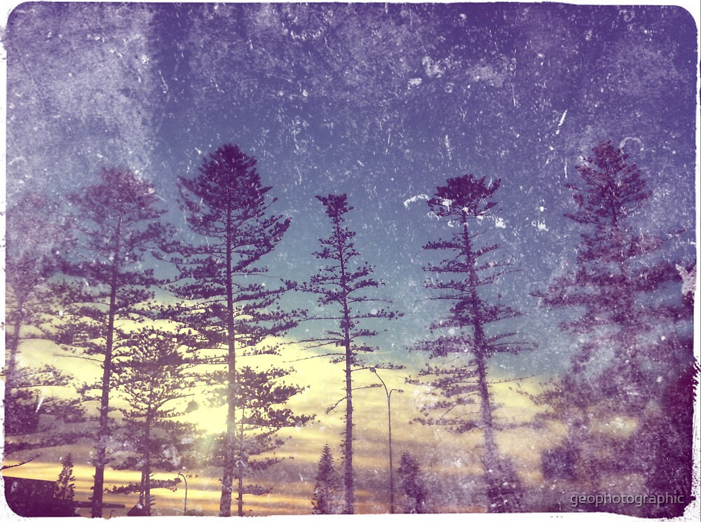 norfolk pines by geophotographic