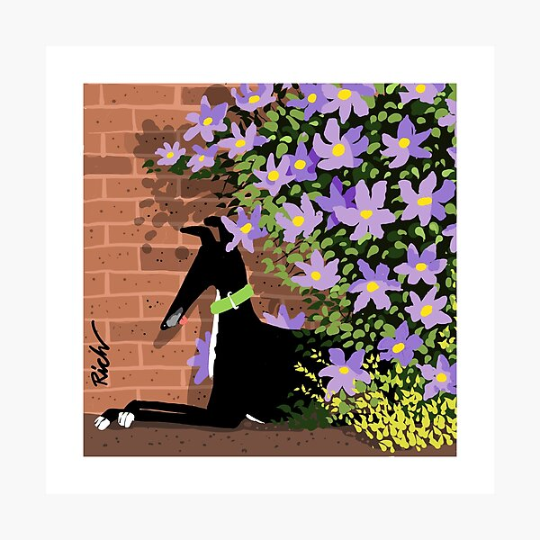 In the Shade of the Clematis Photographic Print