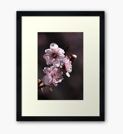 Spring Time..... Framed Print