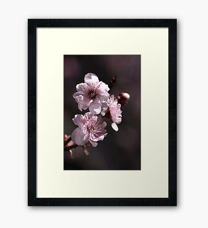 Spring Time..... Framed Print