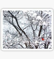 Cardinal in Winter (Central Park) Sticker