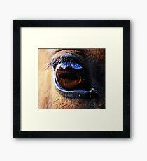 Horse Eye View Framed Print