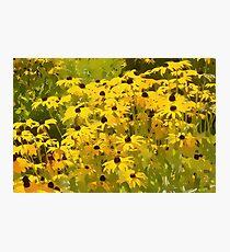 Sunflower Swirls - I Photographic Print