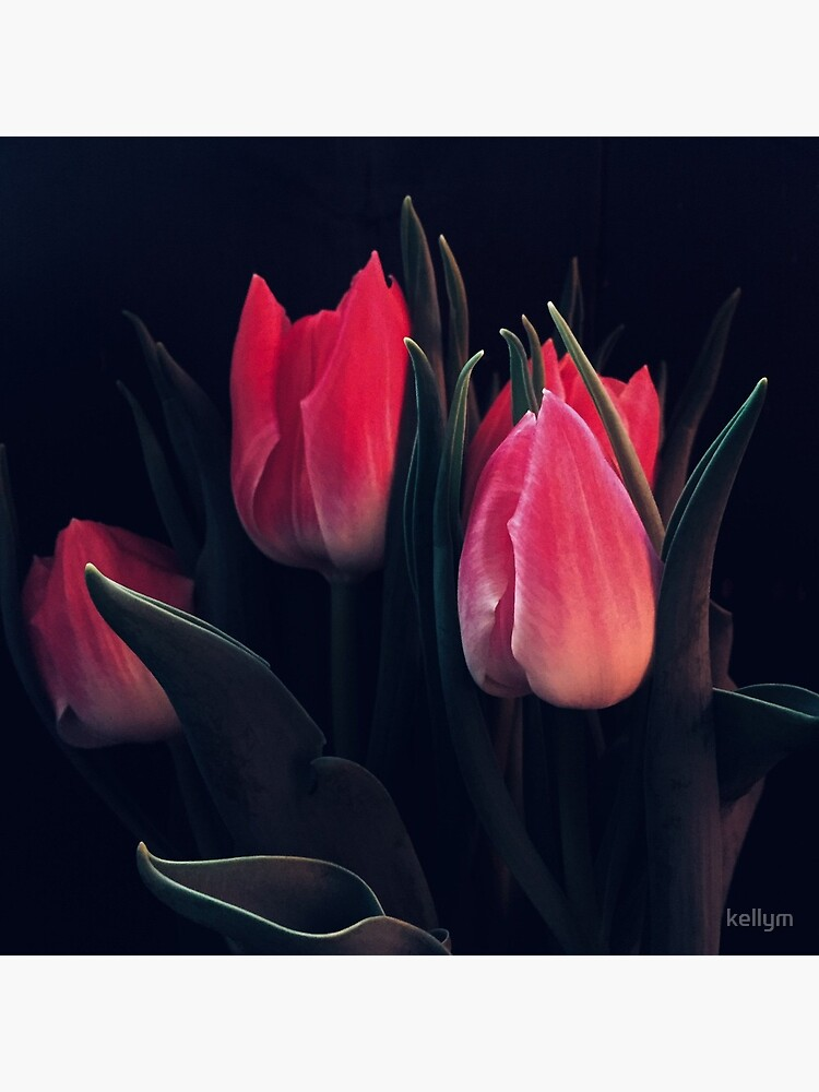 Tulips in Shadow by kellym