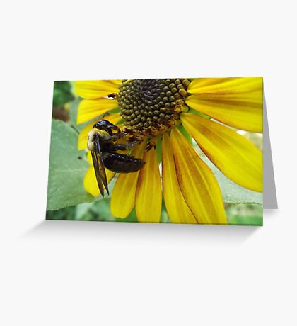 Very Busy Bee Greeting Card