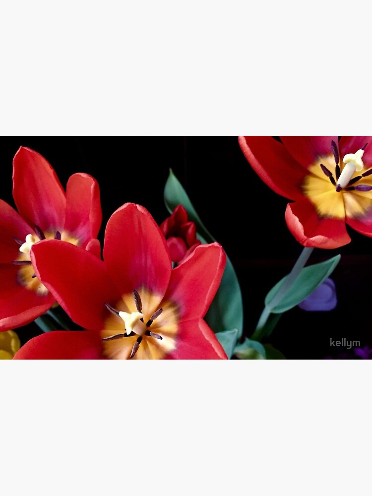 Red, Red Tulips by kellym