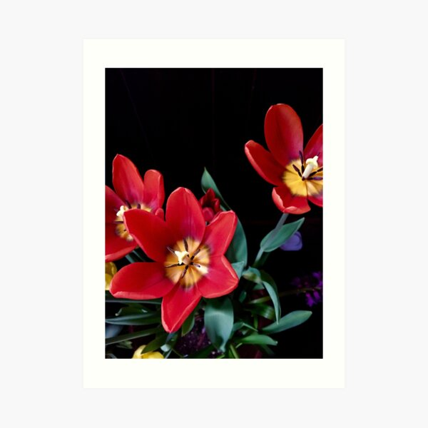 Red, Red Tulips Art Print
