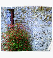 Stone Barn With Fuschia Poster