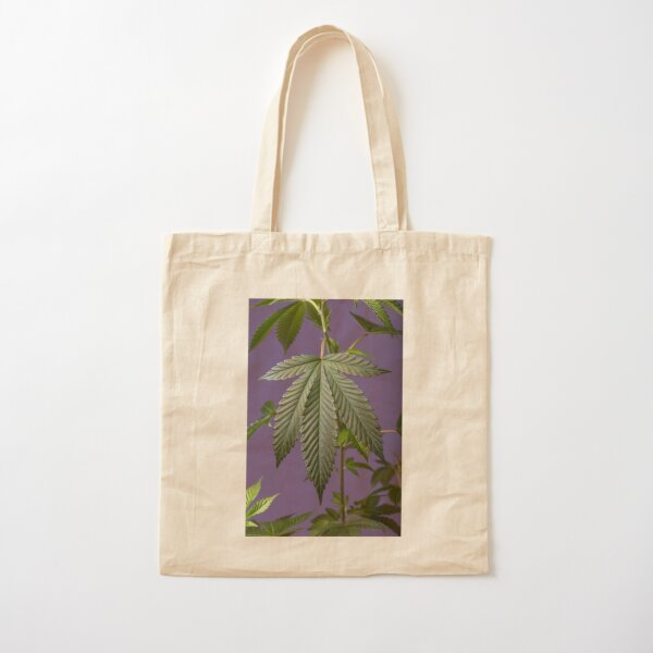 I strive to develop photographs that speak to me and others about the beauty that exists in Cannabis plants.