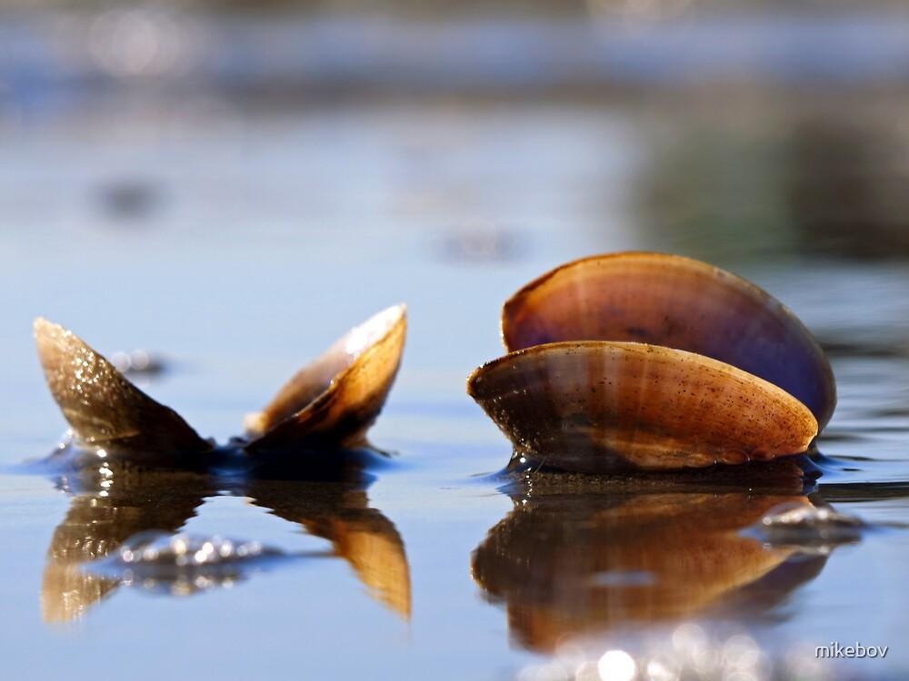 Seashells sitting on the Seashore by mikebov