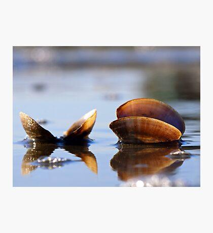 Seashells sitting on the Seashore Photographic Print