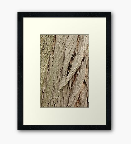 Cedar Bark Framed Print