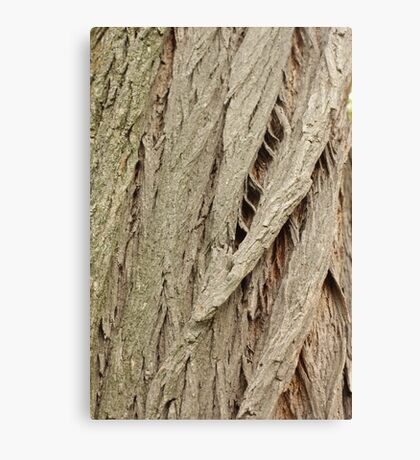 Cedar Bark Canvas Print