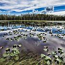 Lily Pond Madness by Kim Barton