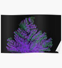 Lavender Bush Poster