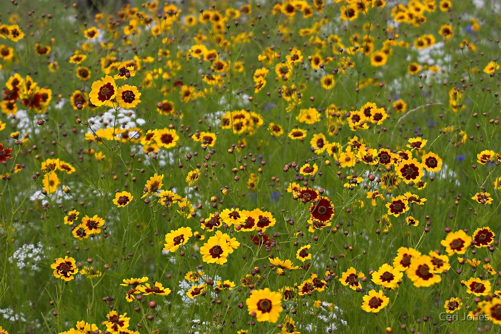 English Meadow # 1 by Ceri Jones