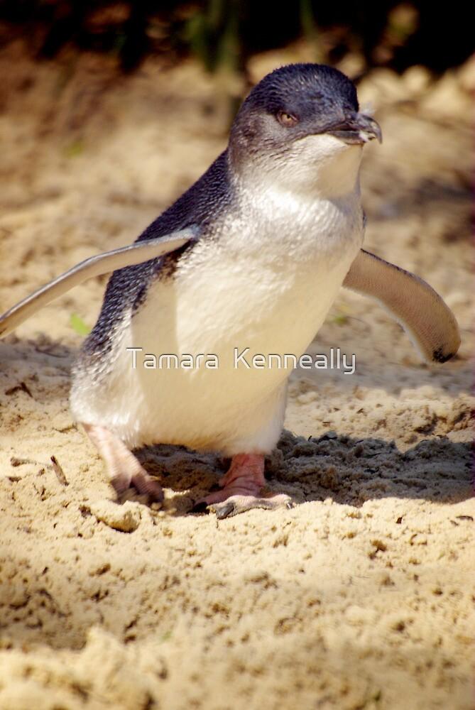 Little Penguin by Tamara  Kenneally