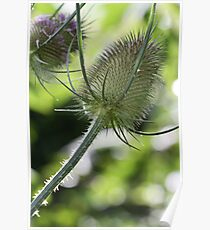 Thistle? Poster