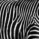 Zebra Pattern by Diego Re