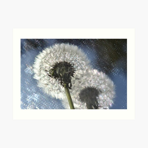 Dandelion Solstice Art Print