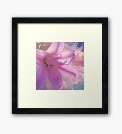 Lily Dream Framed Print