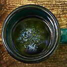 Spring in my Coffee by Richard G Witham