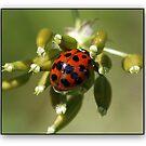 Ladybird in fading la Tourelle by hanslittel