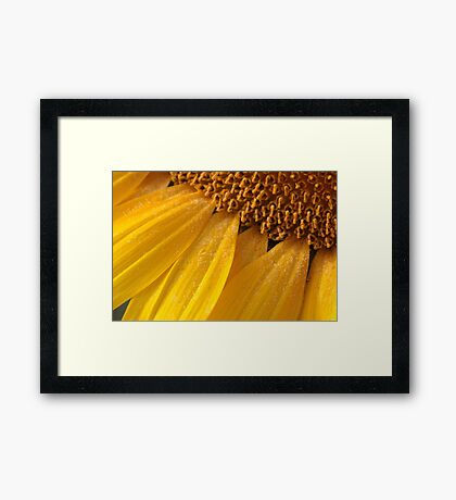 sunny pollen Framed Print