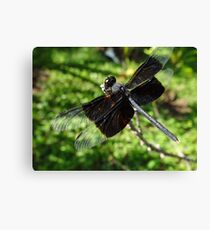Libélula - Dragonfly Canvas Print