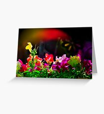Flash - of Color! Greeting Card