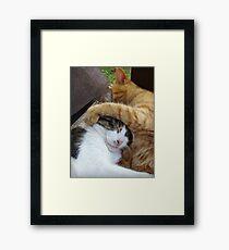 Puggy & Honey Framed Print