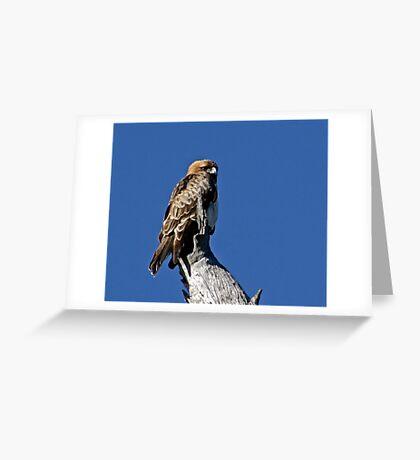 Morning Eagle Greeting Card
