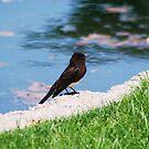Cute Little Bird by Tori Snow