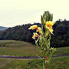 Interesting Flower By The Reservoir by Jane Neill-Hancock