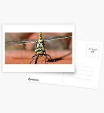 Golden-ringed Dragonfly Postcards