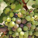 Winery Grapes by aprilann