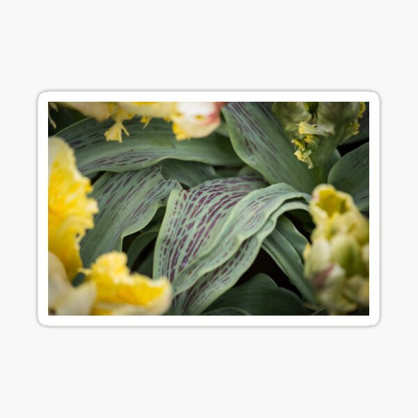 Green and Yellow flower field Sticker