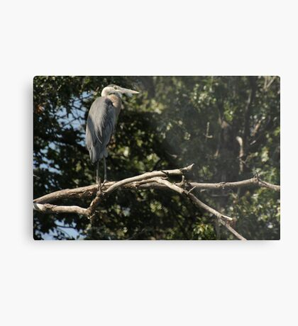 Great Blue Heron on the Wisconsin River Metal Print