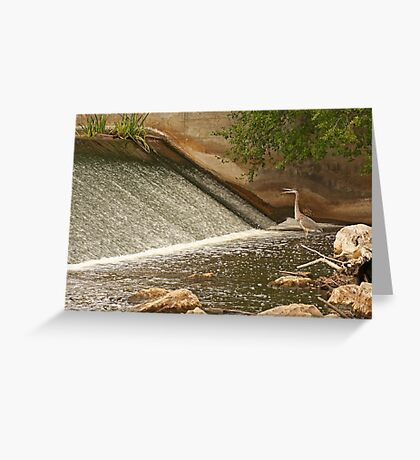 Great Blue Heron Waiting For Fish to Slide Down Greeting Card