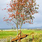 Agricultural, Farm implement, Plough, Rusting, Old by Hugh McKean
