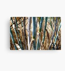 Stems Canvas Print
