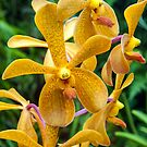 Yellow Spotted Orchid - thin by JagiShahani
