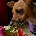 Little sniffer by Jemma Richards