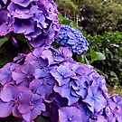 Purple Hydrangea by Ludwig Wagner