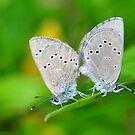 Silvery Blue Pair by Nancy Barrett